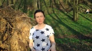 УПАЛО ОГРОМНОЕ ДЕРЕВО С КОРНЕМ в Москве ☯ Культурный код