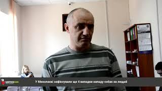 В Николаеве зафиксировали еще четыре случая нападения собак на людей / Shipovnik.ua