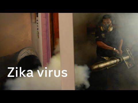 Zika virus: Women in El Salvador advised to avoid pregnancy