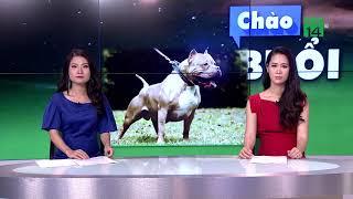 Hà Nội: Chó Pitbull bị đánh chết vì cắn trọng thương chủ và hàng xóm | VTC14