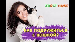 Как подружиться с кошкой?