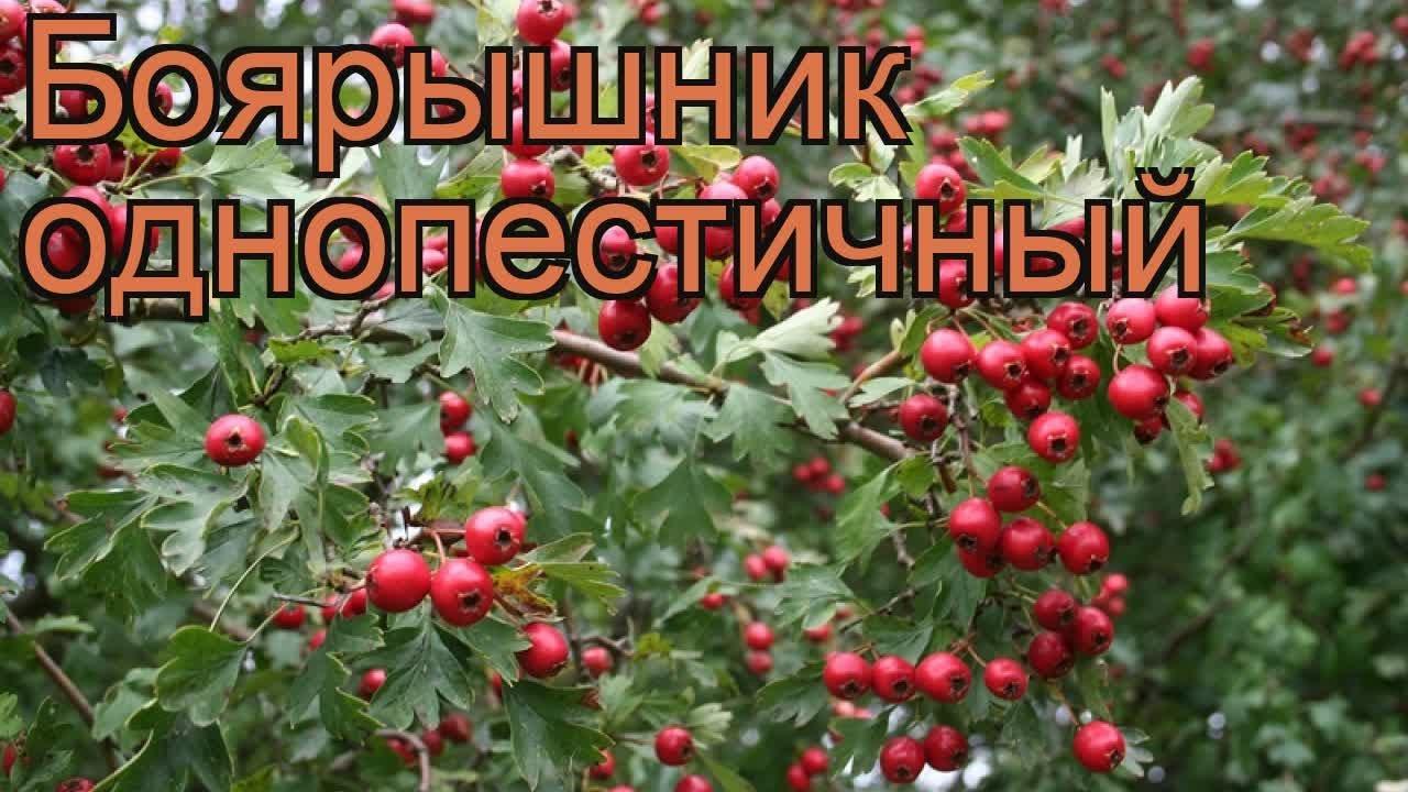 Весенние лесные ландыши - открытка 4351 рубрики