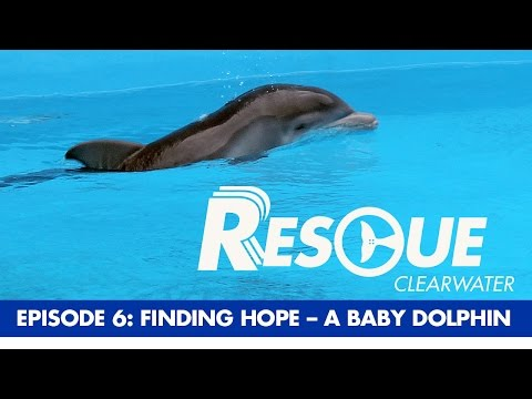 A Baby Dolphin Rescue, Finding Hope. Rescue-Clearwater Episode 6.