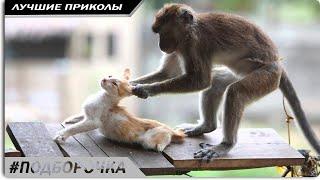 ПОДБОРОЧКА, смешные видео про животных до слез новые #2