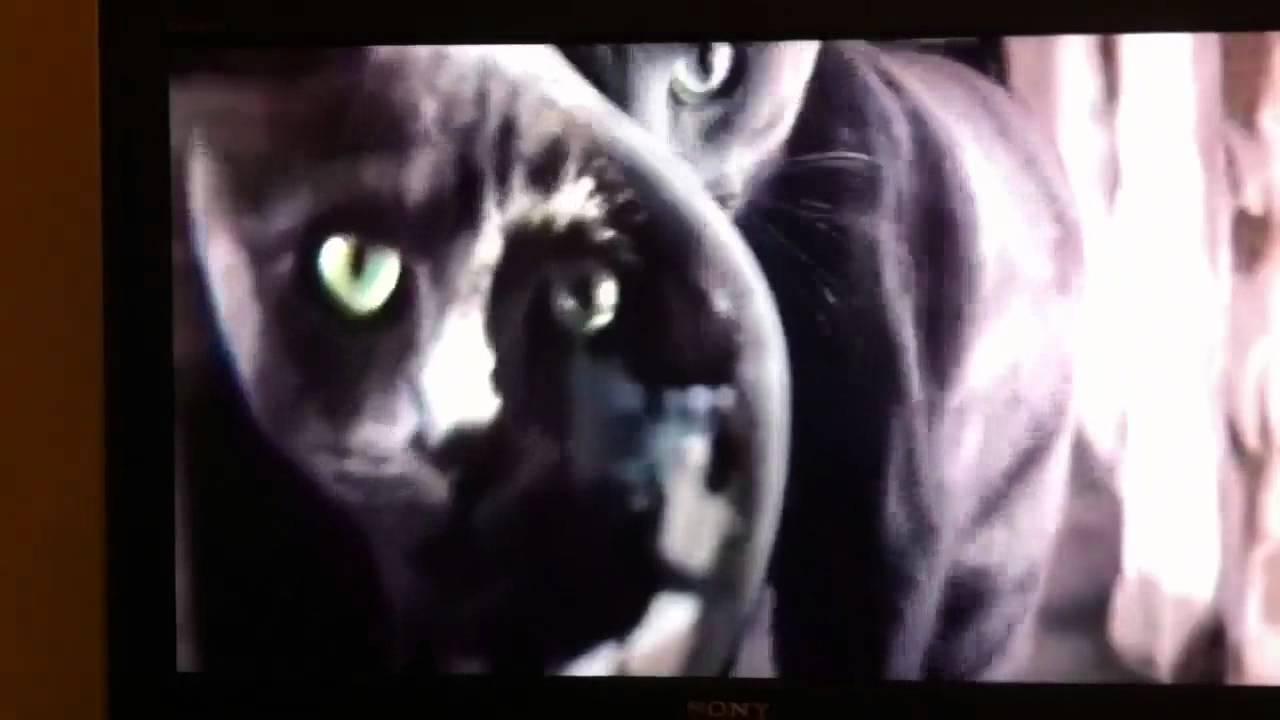 Sheba Cat Food Advert