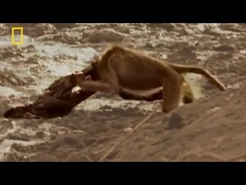 Animals Documentary: Crocodiles without Water