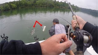Catching BIG Stripers On Planer Boards (Ft. Tennessee River Monsters)