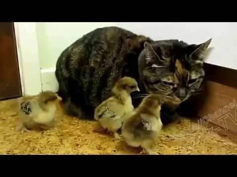 Смешное видео про животных, смотреть прикольное видео с