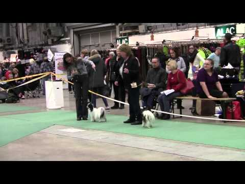 Swedish Winner Show 2013, Papillons, Best of Breed