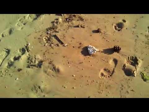 Vídeo vertido y suciedad Playa Mogro