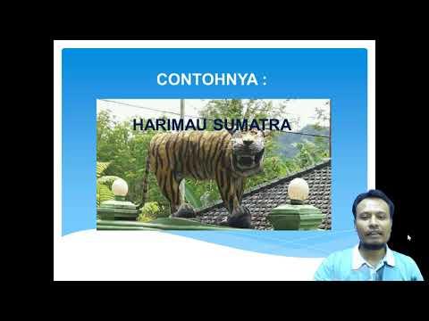 VIDEO PAKET C DARING : Geografi - Persebaran Flora dan Fauna di Indonesia