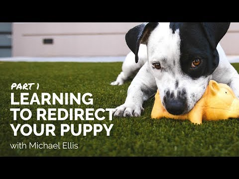 Part 1 - Learning to Redirect Your Puppy with Michael Ellis