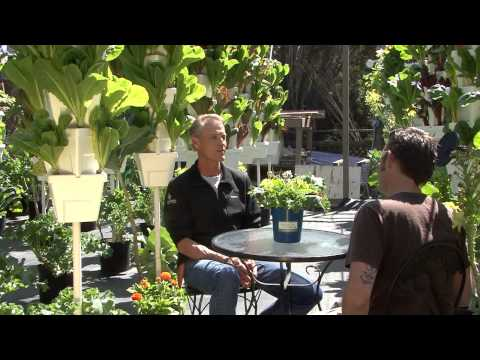 Hydroponic Growing Entrepreneur: Alegria Farms Interview with Rosebud Magazine
