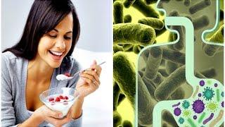✅ Os 15 Melhores Probióticos e Prebióticos para Cuidar de sua Saúde!2019