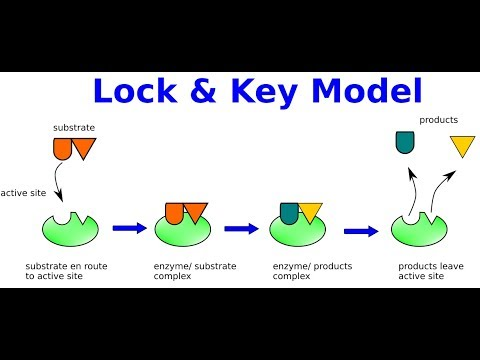 Inkscape For Scientists 12 Illustration Of Lock And Key Model Of