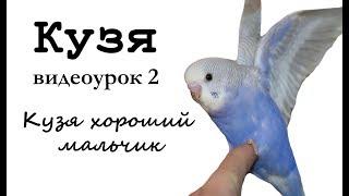 """♫ Учим попугая по имени Кузя говорить, видеоурок 2: """"Кузя хороший мальчик"""""""