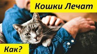 Как Кошки Лечат, и Какие Болезни Лечит Фелинотерапия
