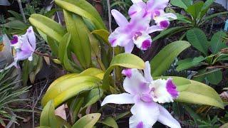 Adubo Para Orquídea – Linda Floração