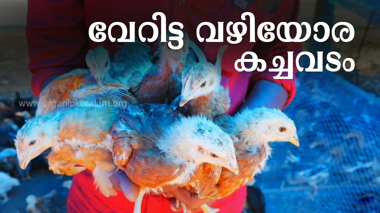 കൂടില്ലാതെയും കോഴിക്കച്ചവടം നടത്താം | Roadside Vending | Chicken Breeding