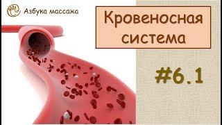 Кровеносная система | Урок 6, часть 1 | Обучение массажу