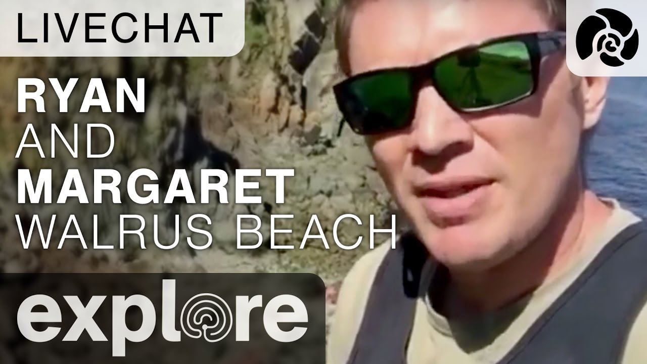 Ryan and Margaret on the Main Walrus Beach - Live Chat