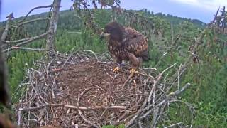 eagle landing fail is something you won t see everyday   fail landing   fail landing