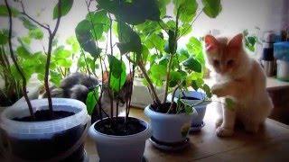 Cat eats ground.Кот ест землю.