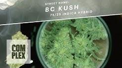 Motor City High: BC Kush Marijuana Strain | Ep 6 On Complex