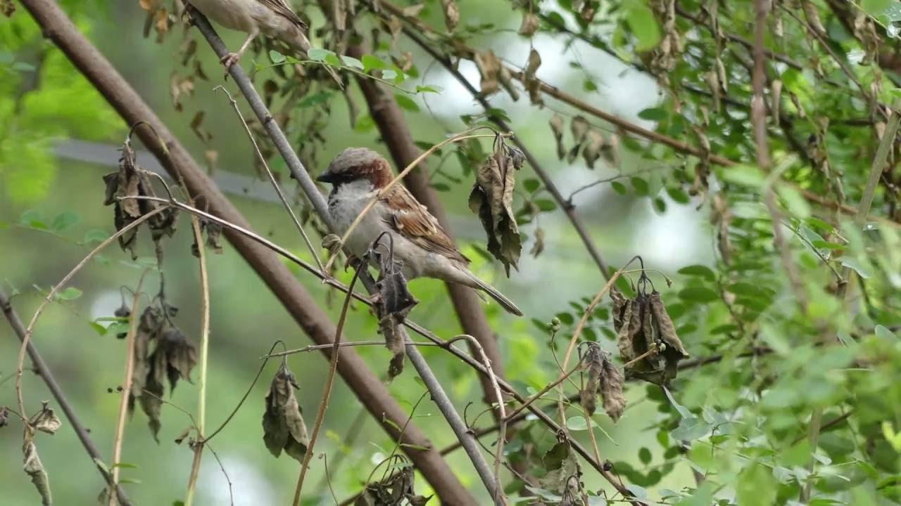 Natural Beauty Birds