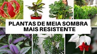 10 PLANTAS PARA SER CULTIVADA A MEIA SOMBRA – RESISTENTES A PRAGAS
