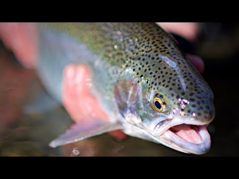 Fly Fishing For Winter Steelhead     From Client To Friend