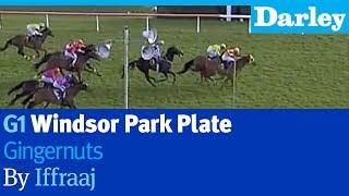 Gingernuts by Iffraaj wins the G1 Windsor Park Plate at Hastings