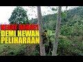 Nekat Banget Demi Peliharaan Di Rumah Pohon Besar Dan Tinggi Ini Berani Di Panjat  Mp3 - Mp4 Download