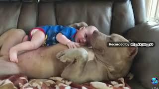 СОБАКИ защищают детей-собаки няньки, собаки защитники ,помошники