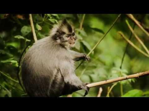 Wonderful Indonesia : Nature & Ecotourism