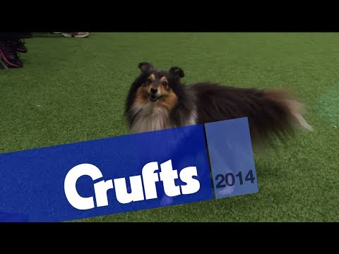 Agility | Small, Medium & Large Singles Heat | Crufts 2014