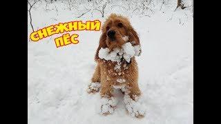 #VLOG DOG #Снежный пес #Итоги конкурса