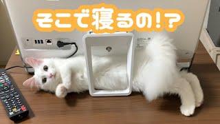 パソコンの裏の微妙な隙間でリラックスする猫w
