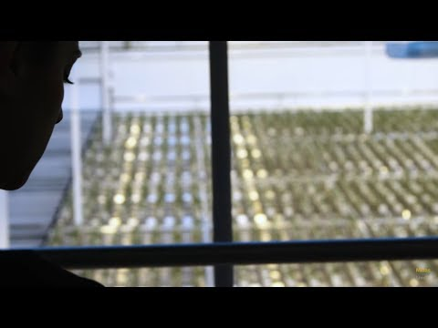 Aurora Sky Site Tour: Aurora Cannabis Inc (TSE:ACB) Pioneers a New Way to Grow Cannabis