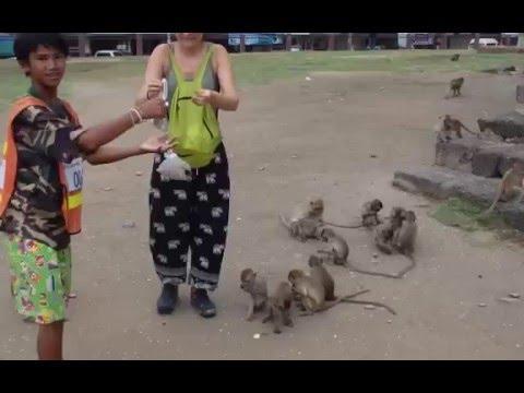 Feeding the monkeys at Lopburi, Thailand