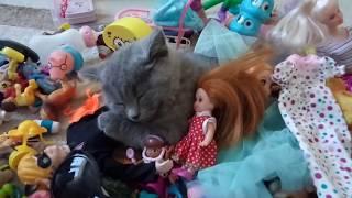 КОТЁНОК СПИТ.#Scottish kitten sleeping. КАК нужно пеленать котенка.