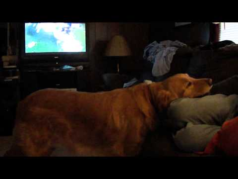Dog watches Puppy Super Bowl VIII on TV Crazy Funny (Part 2 of 2)