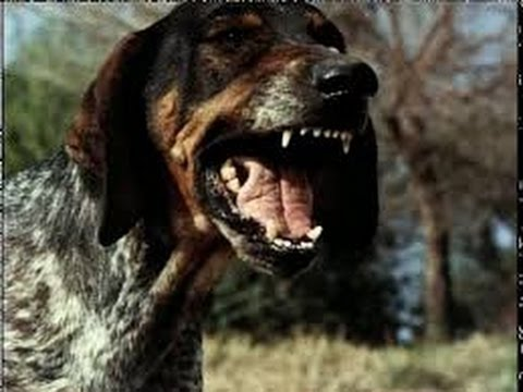 Black Tan Hound Dog Puppies Youtube