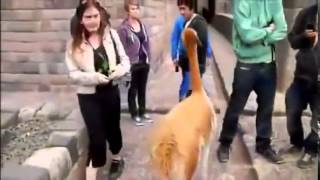 Comedy Clips Downloads Sms Funny Jokes In Hindi Funny Clips Videos Download Funny Video Free Downloa