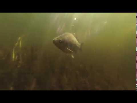 Подводная охота на Базе отдыха Прохладная!