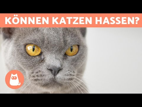 Hasst Mich Meine Katze? 😾 - 5 Anzeichen Richtig Verstehen