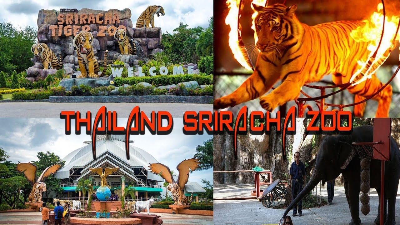 Thailand Sriracha Tiger Zoo - YouTube