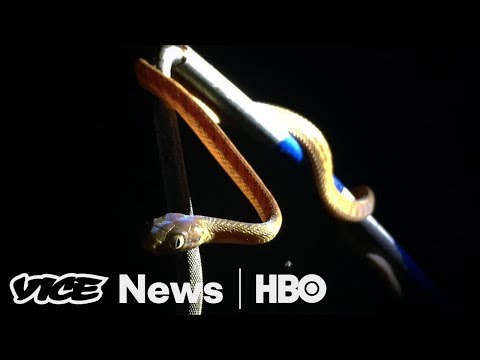 Guam's Snake Invasion & Chernobyl Nuclear Power Plant: VICE News Tonight Full Episode (HBO)