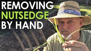How to Remove Nutṡedge by Hand || Black Gumbo