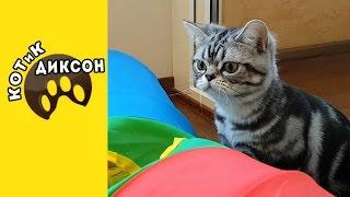 🐾😺 КОТиК ДИКСОН.  Атаки. Засады. Погони.Смешное видео про кошек.